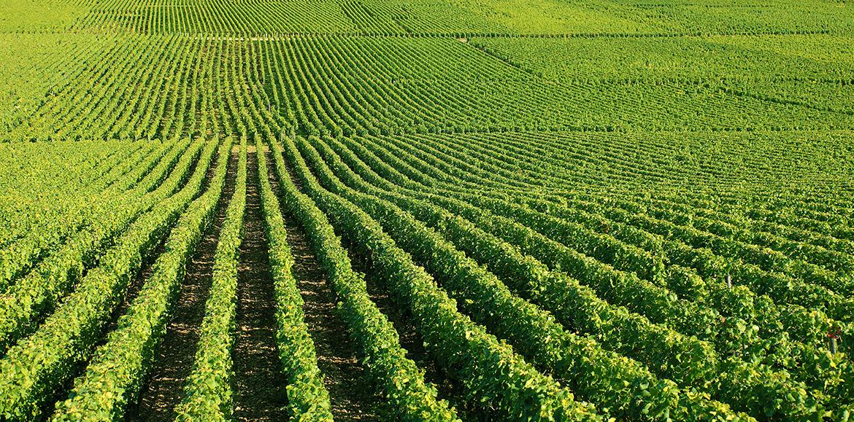 Agricultura_IFEC-1170x579